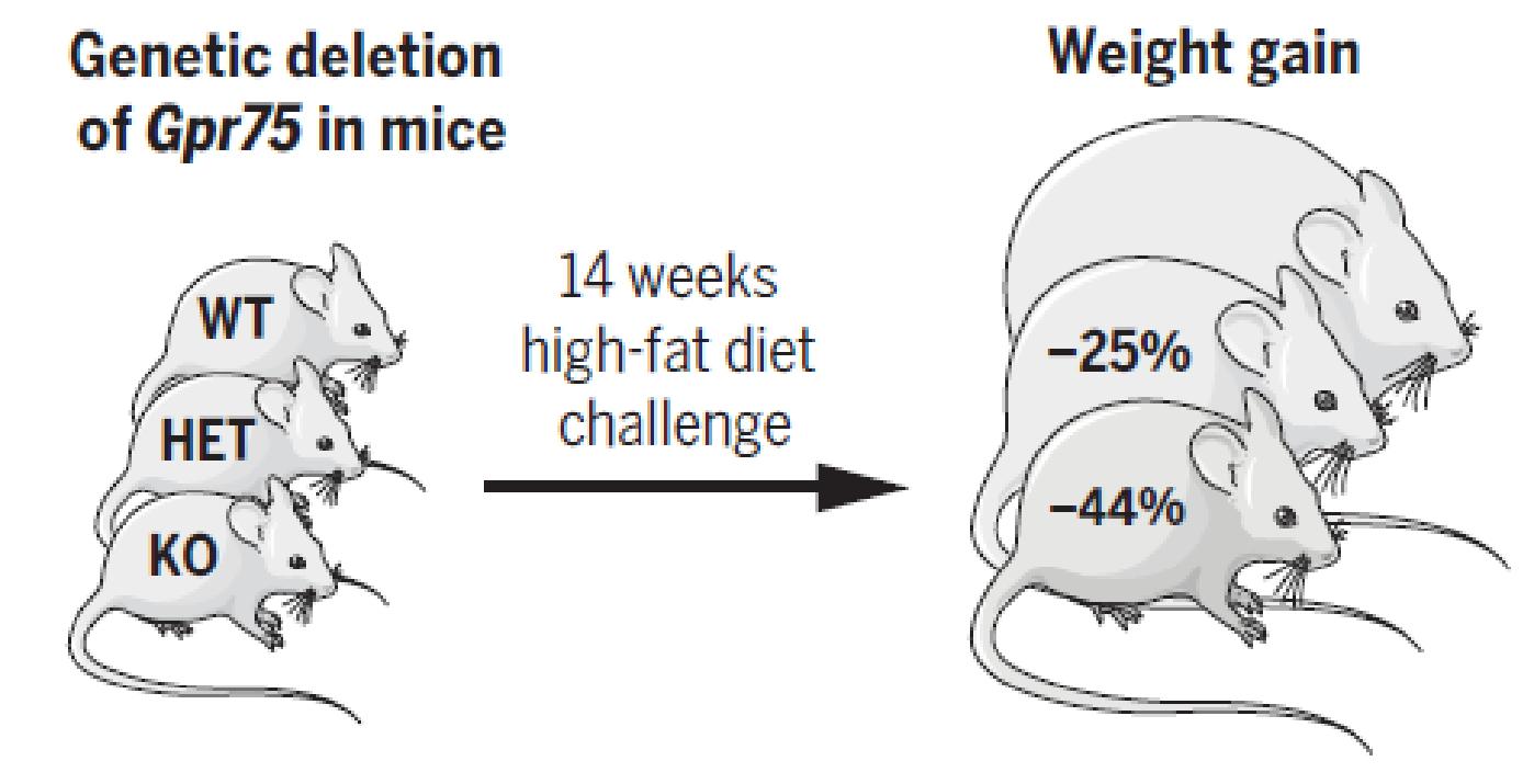 真有吃不胖的天选之人?科学家揪出造成肥胖的关键基因插图(3)