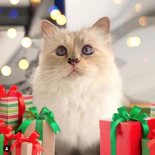 你要羡慕一只猫了!老佛爷生前透露由爱猫和教子继承他的上亿遗产插图5
