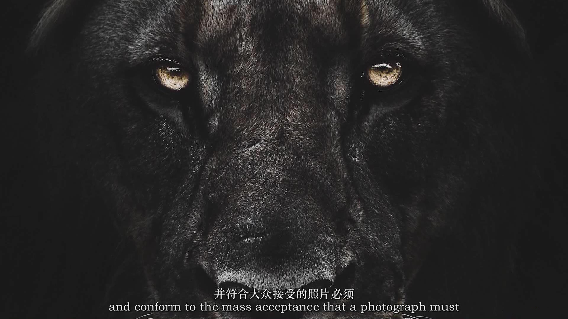 摄影教程_Chase Teron的终极野生动物摄影及后期套装教程附RAW素材-中英字幕 摄影教程 _预览图5