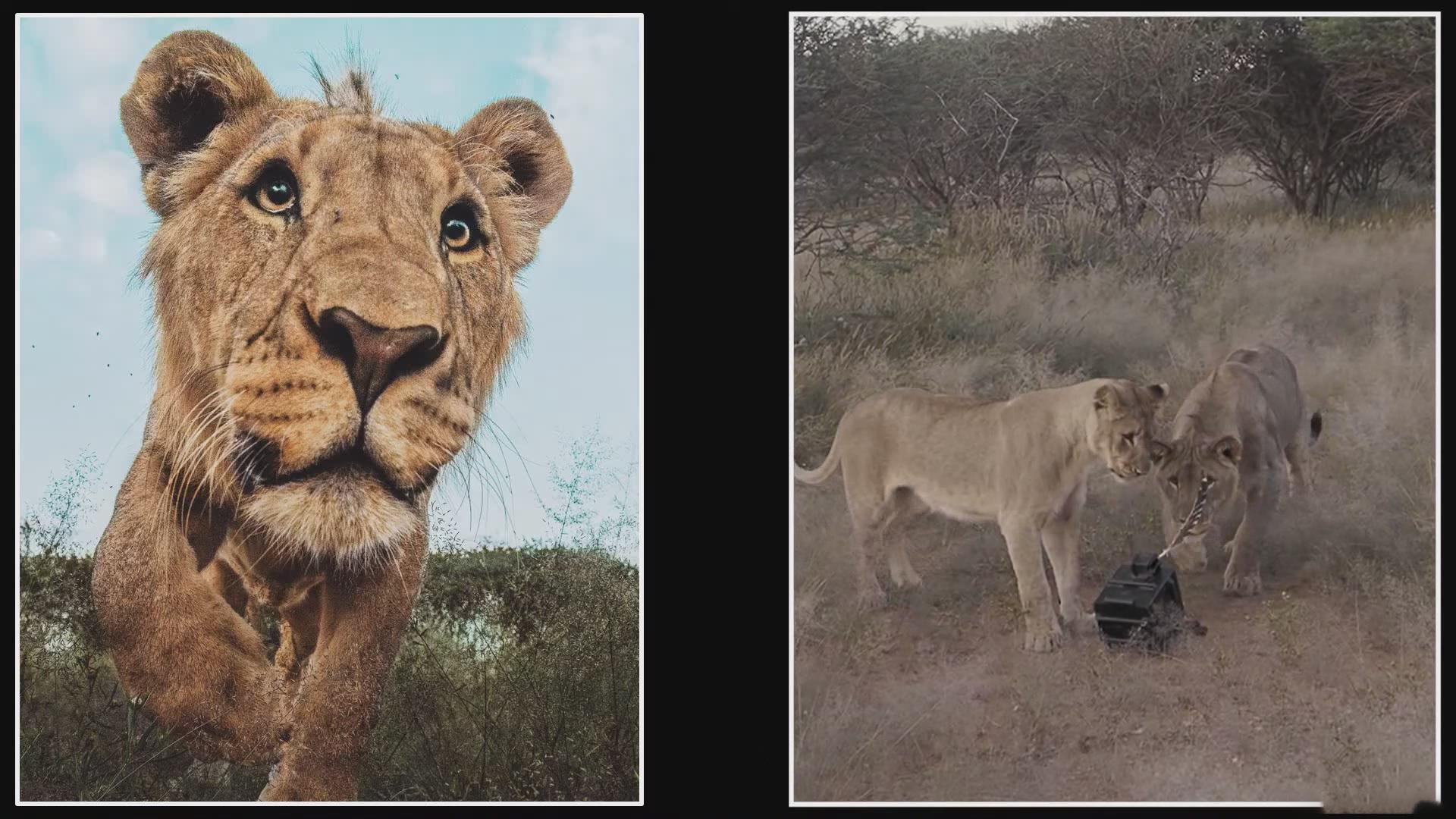 摄影教程_Chase Teron的终极野生动物摄影及后期套装教程附RAW素材-中英字幕 摄影教程 _预览图7