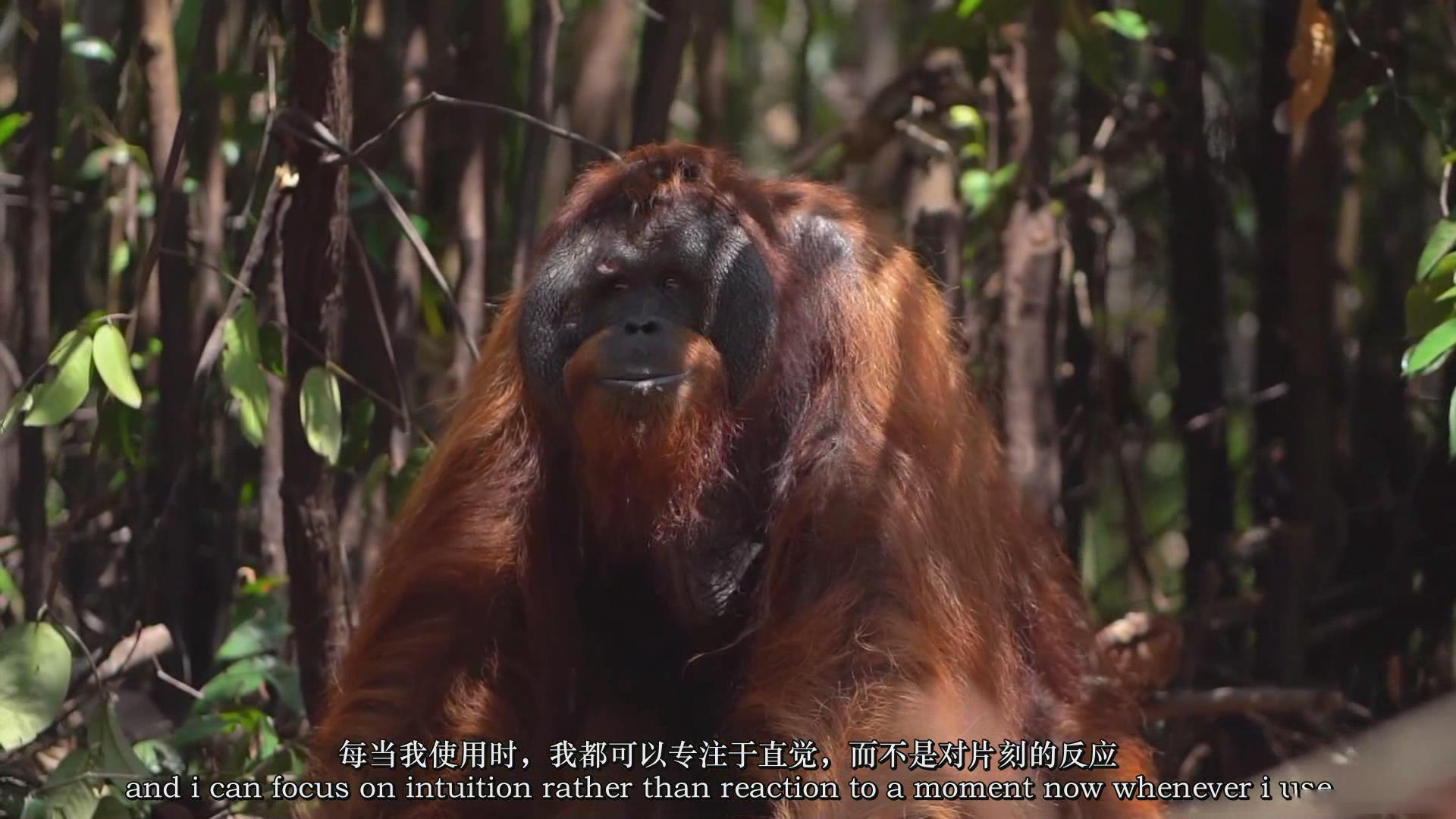 摄影教程_Chase Teron的终极野生动物摄影及后期套装教程附RAW素材-中英字幕 摄影教程 _预览图9