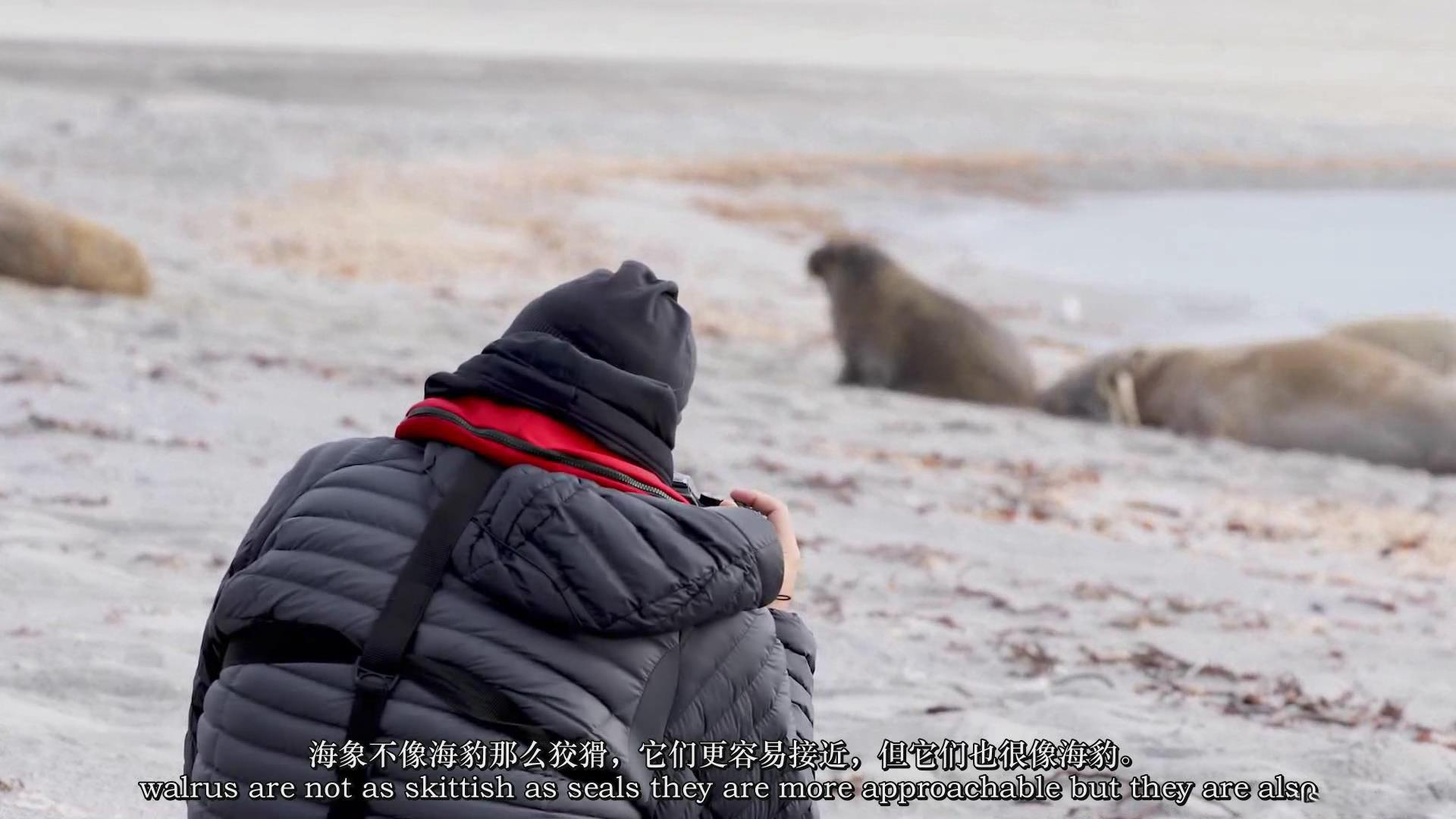 摄影教程_Chase Teron的终极野生动物摄影及后期套装教程附RAW素材-中英字幕 摄影教程 _预览图18
