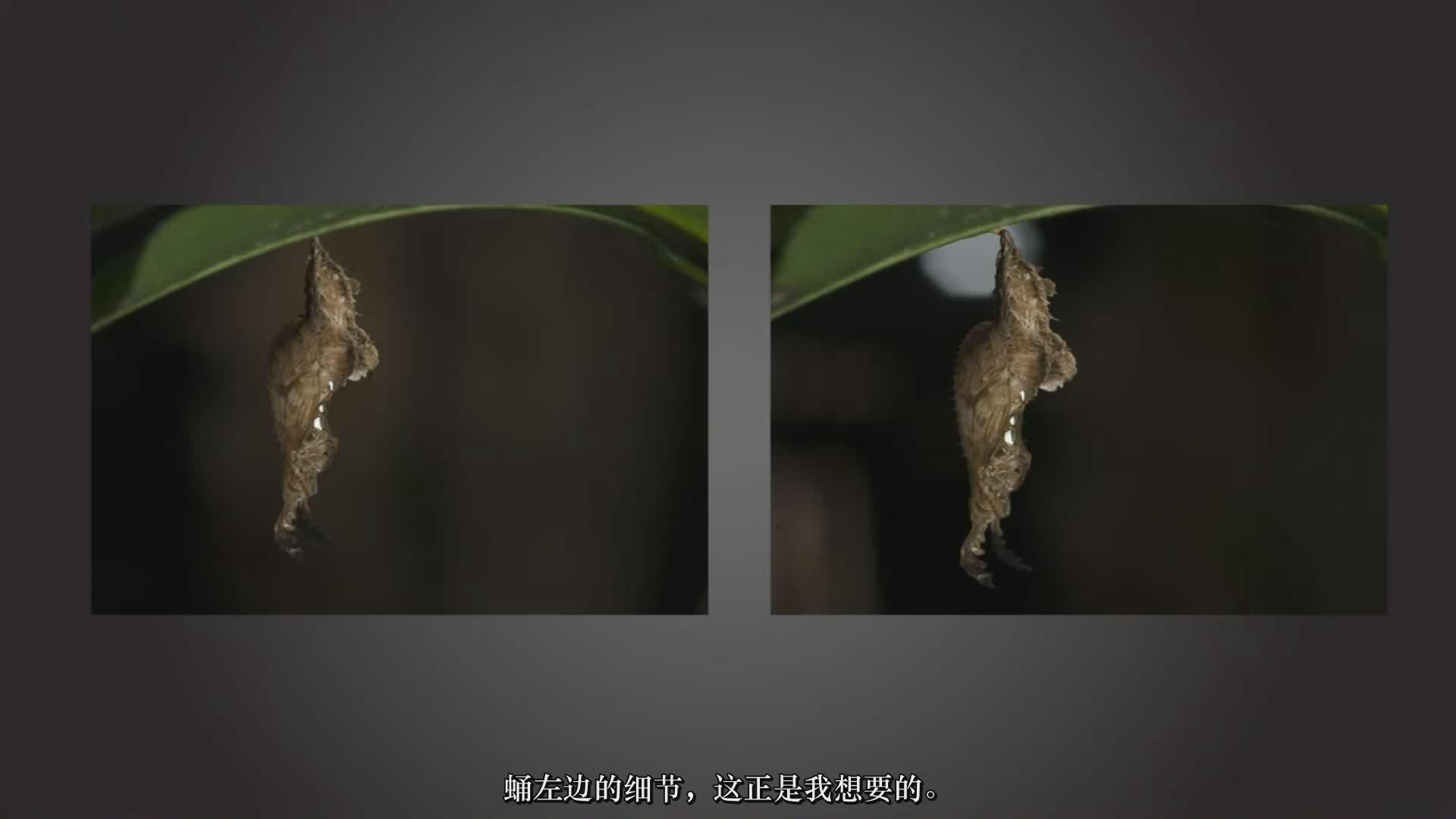 摄影教程_Craftsy –宏观摄影:精通昆虫微距摄影完整指南教程-中文字幕 摄影教程 _预览图7
