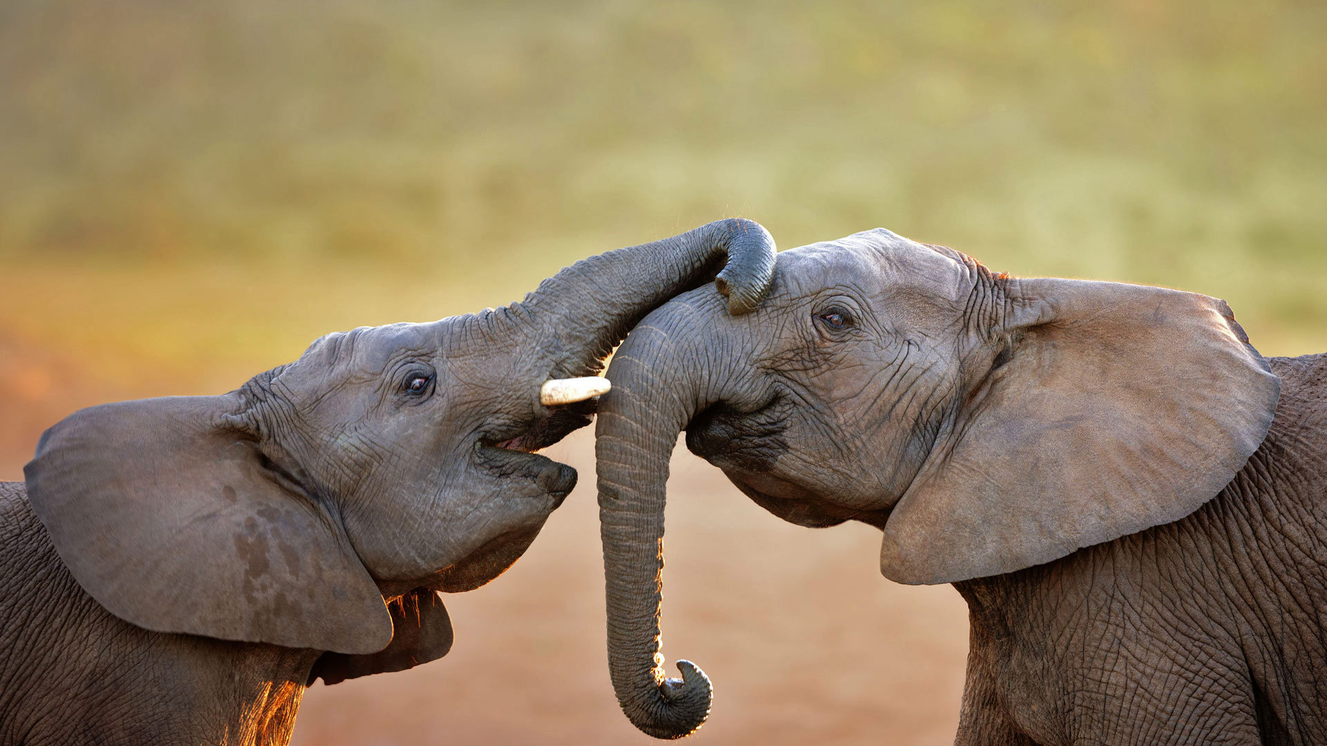 非洲象的乐园