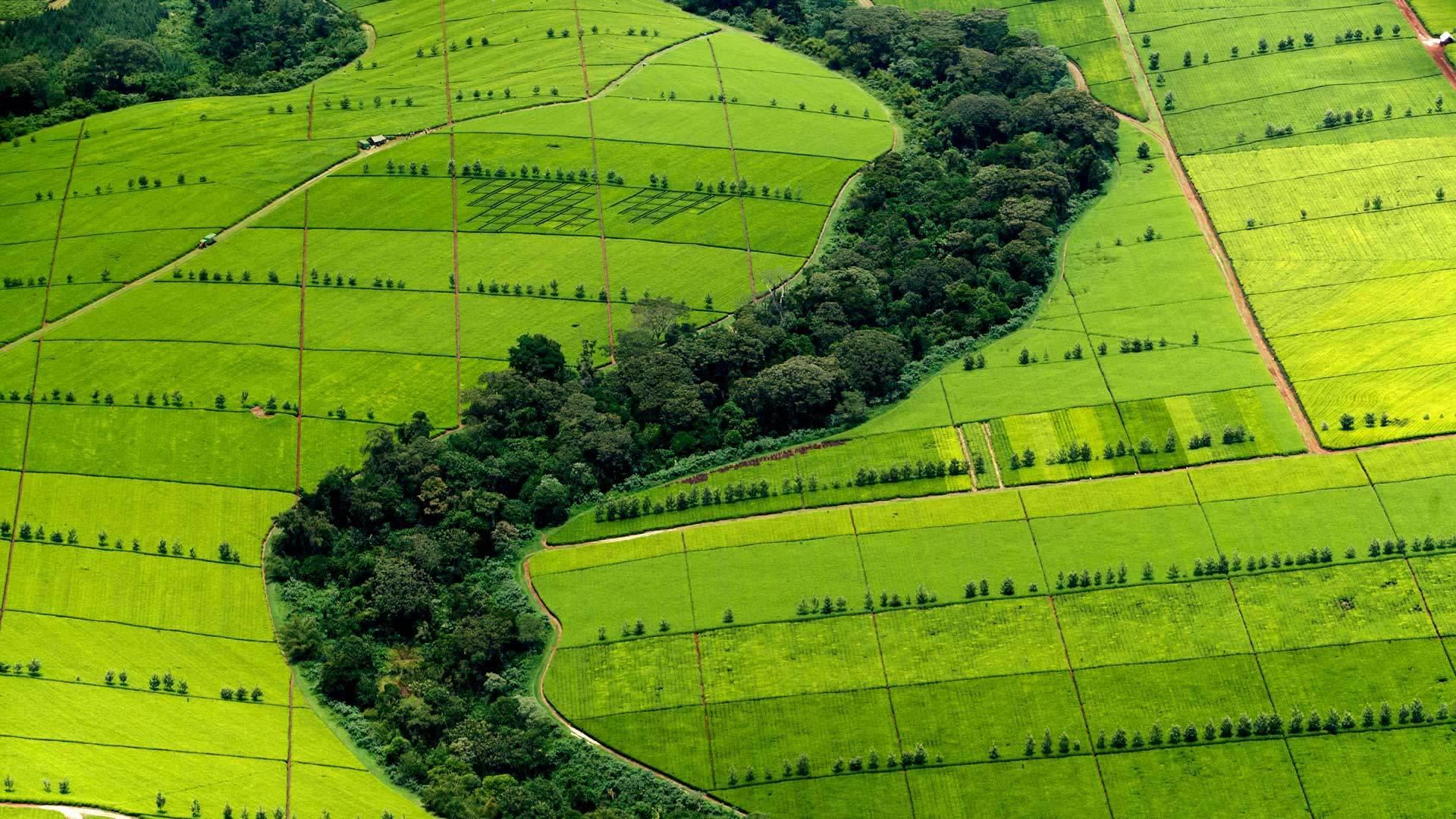 享誉全球的红茶乡