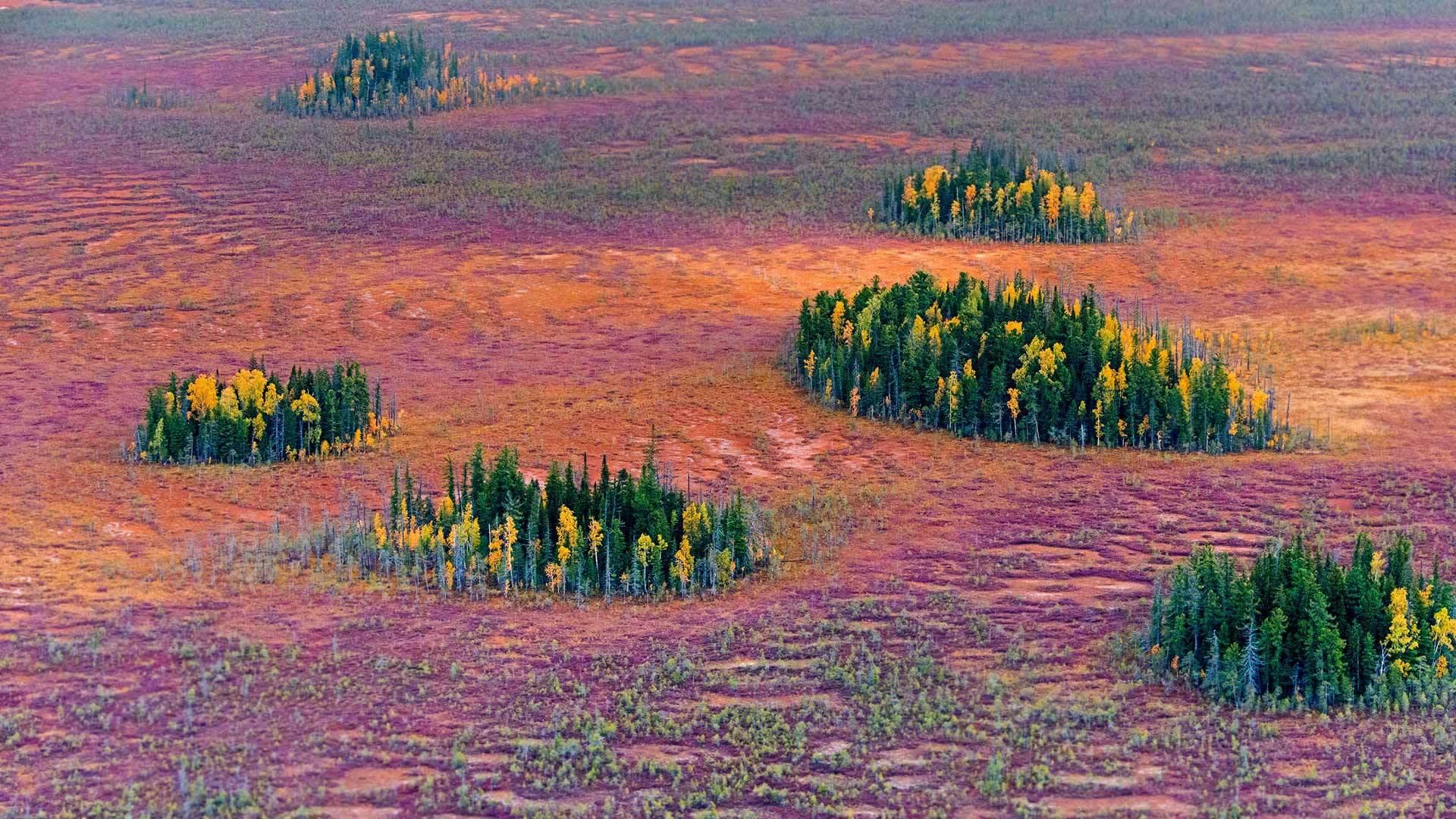 针叶树林的秋