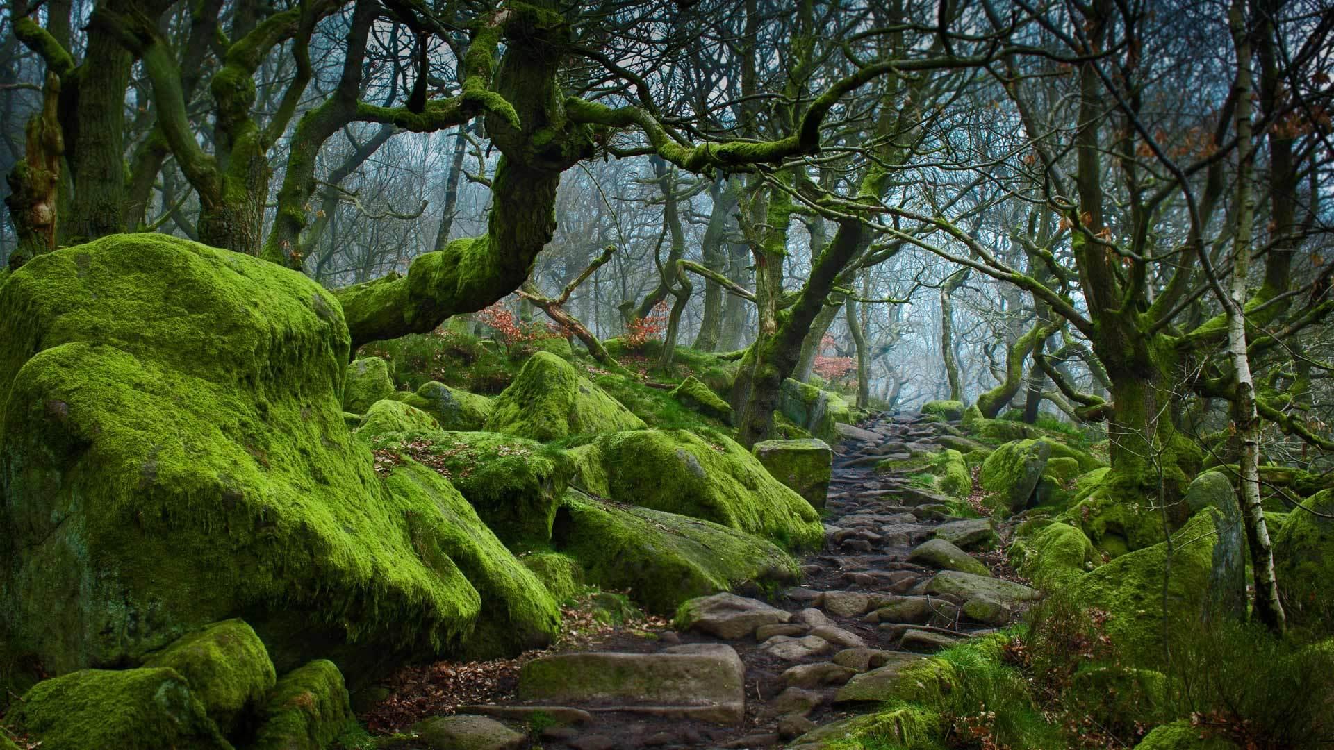 走在峡谷的小路上