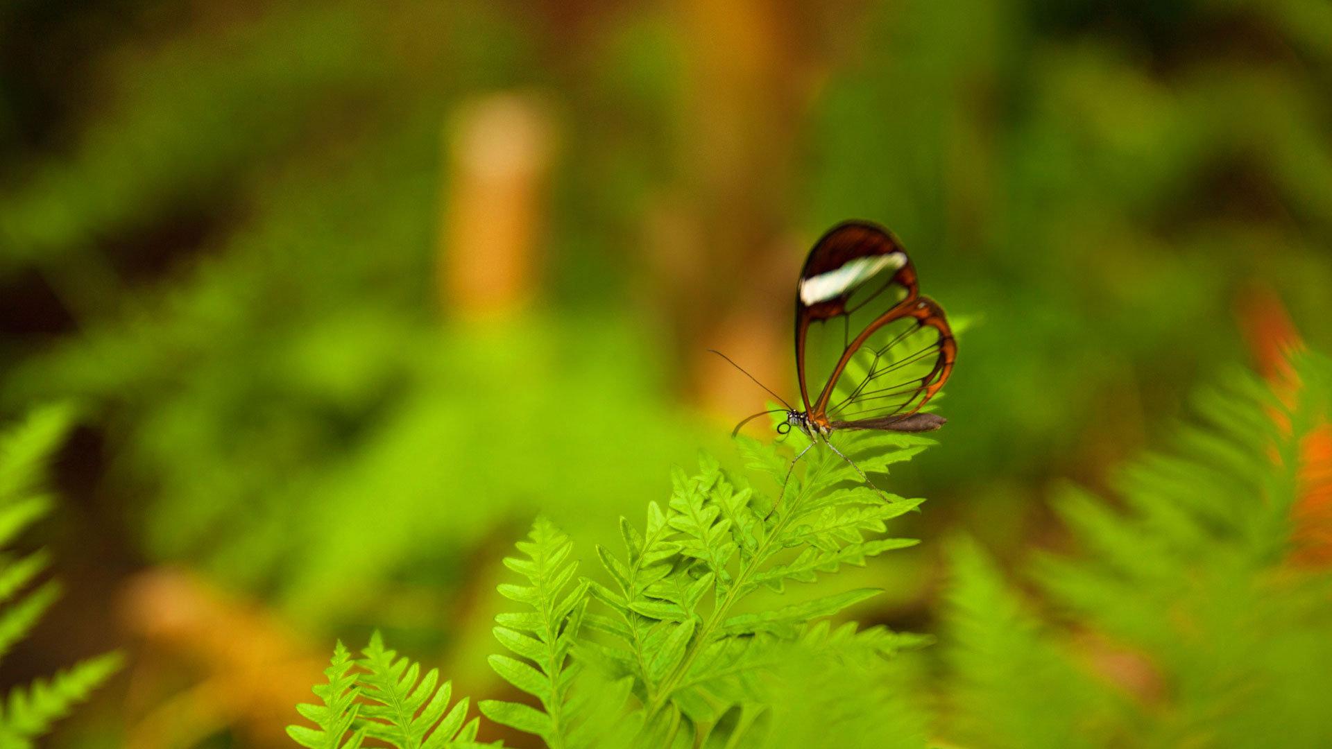 江头楂树香 岸上蝴蝶飞
