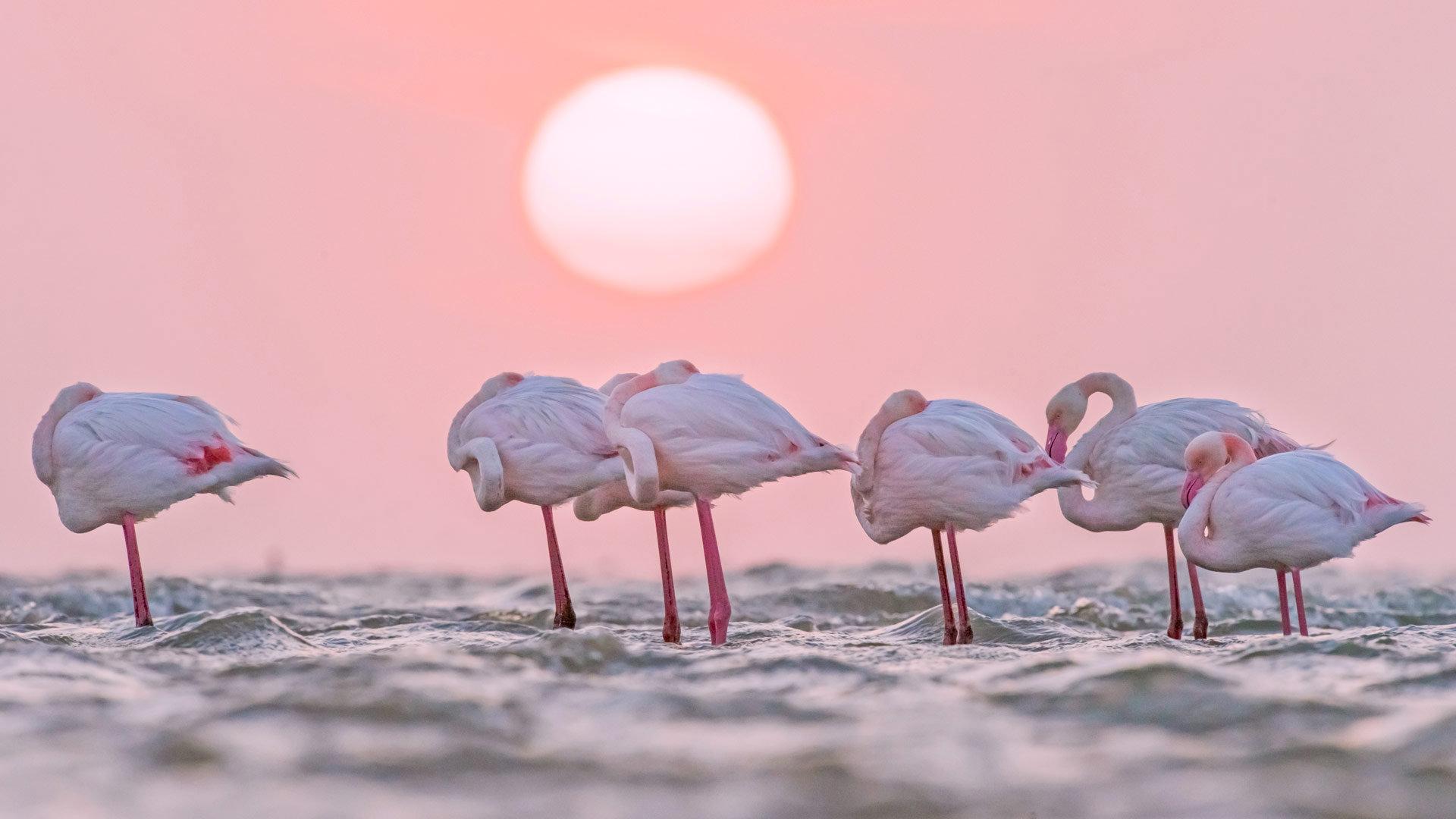蔚蓝海岸的一抹粉红