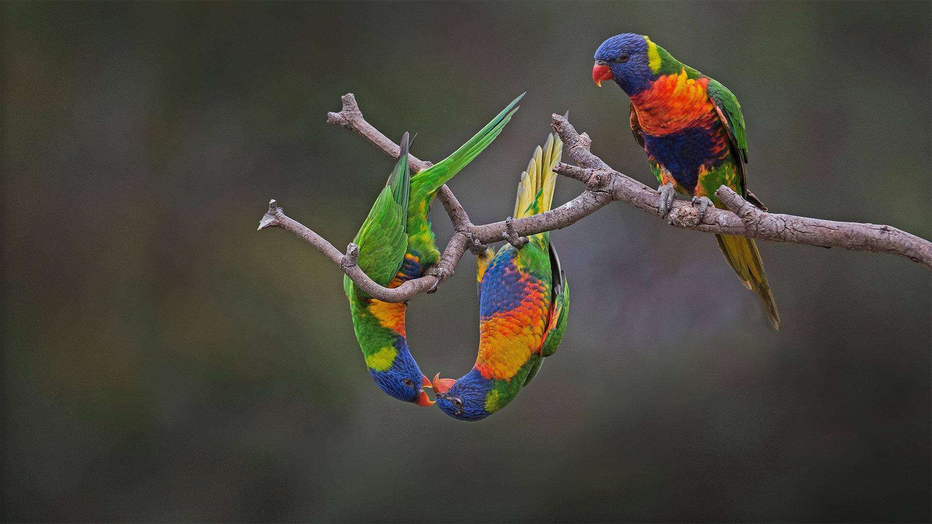 大自然的色彩