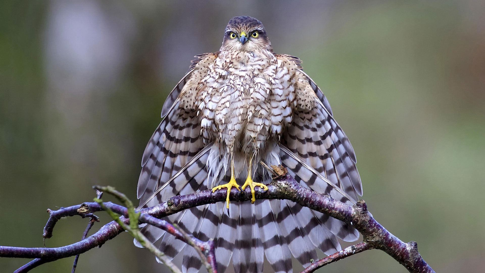 在这个鸟吃鸟的世界