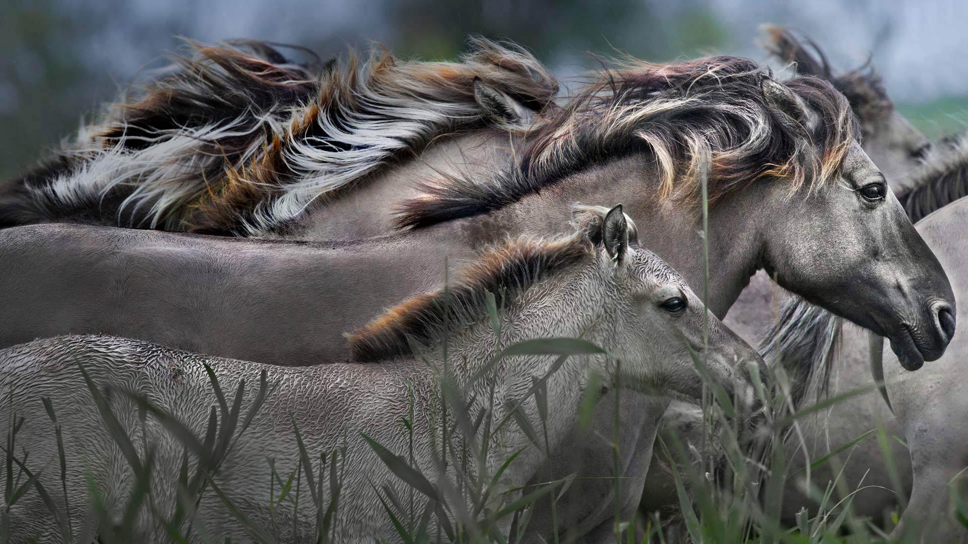 身材小巧的小马驹