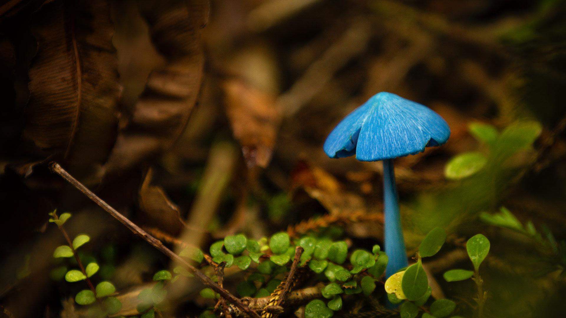 会变色的真菌
