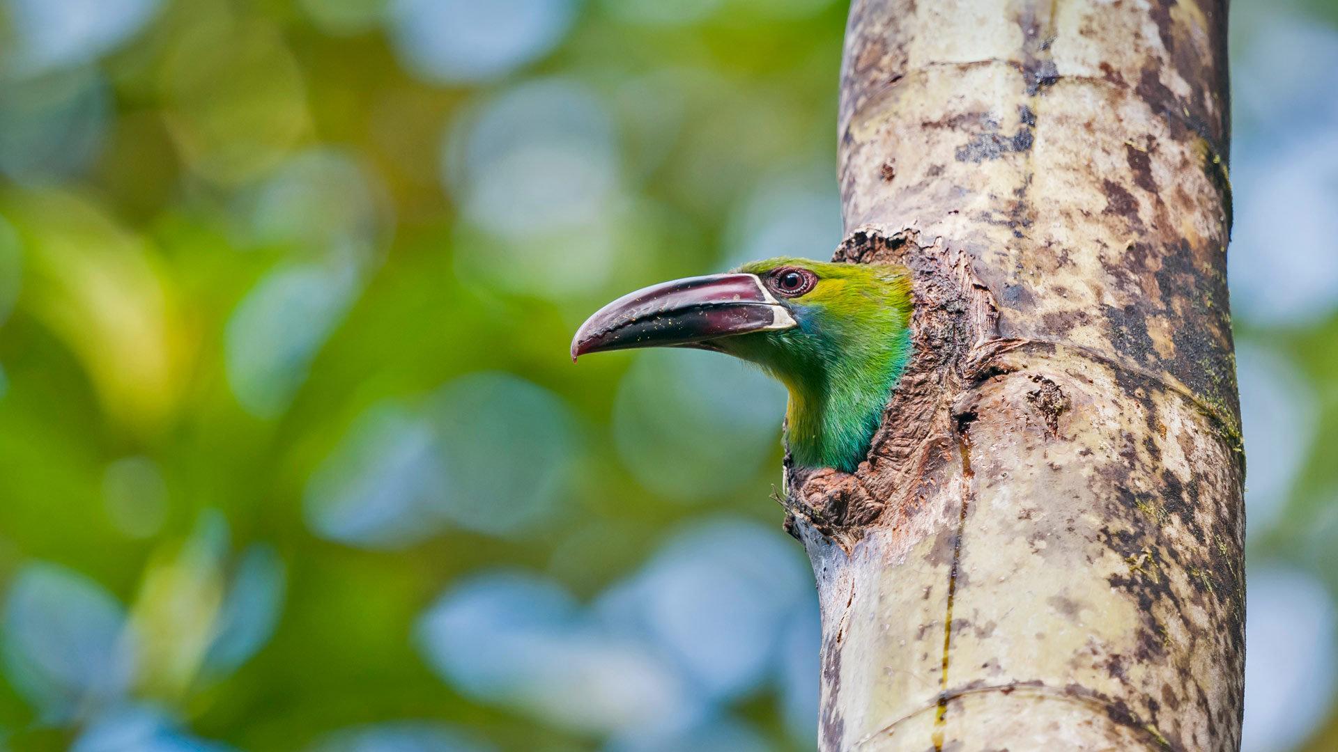 厄瓜多尔的绿色精灵
