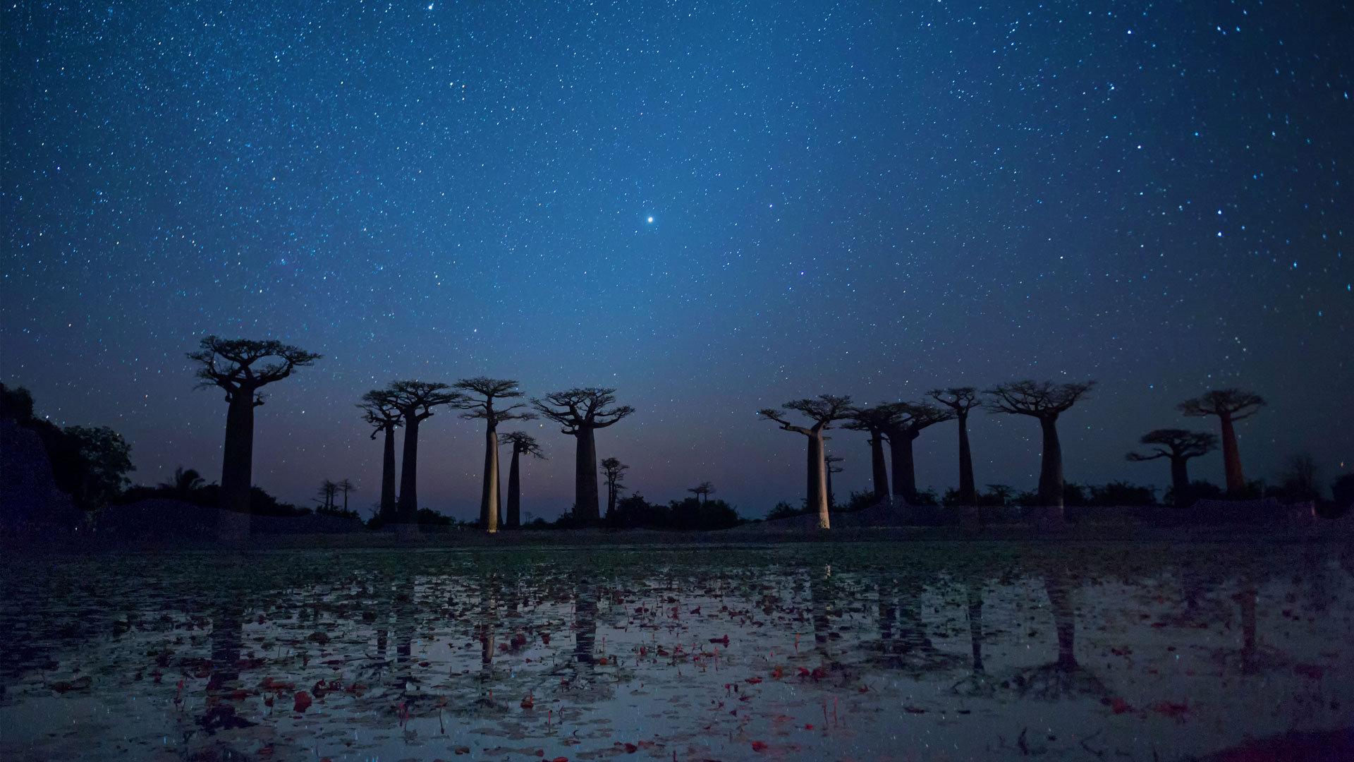 星空下的猴面包树