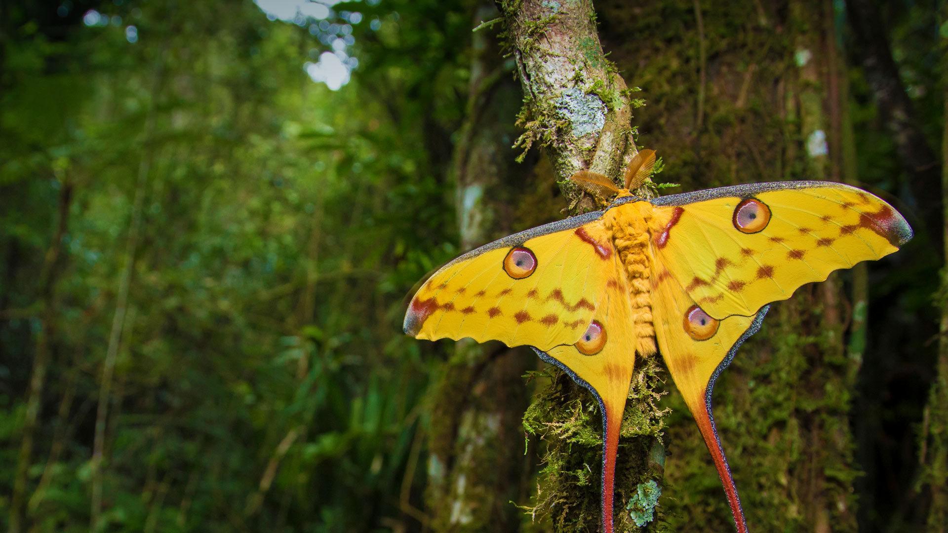 原始丛林的超自然感