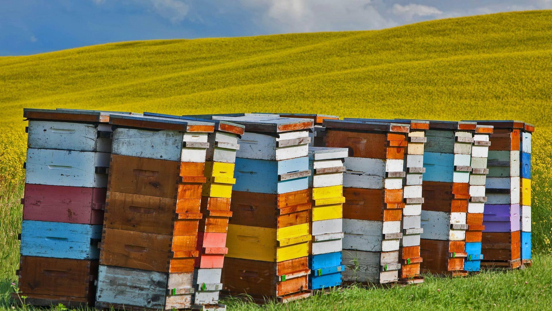 蜜蜂的归宿