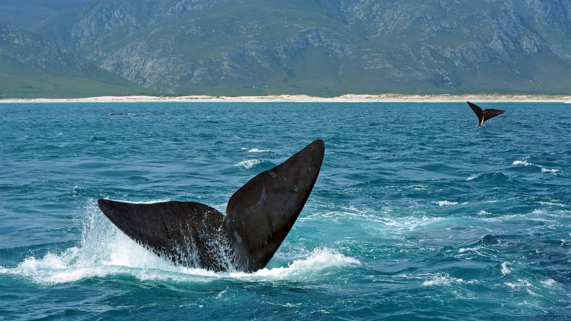 鲸鱼节的盛大狂欢