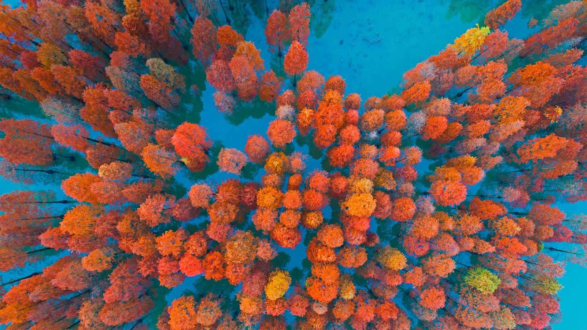 秋天里的一抹红