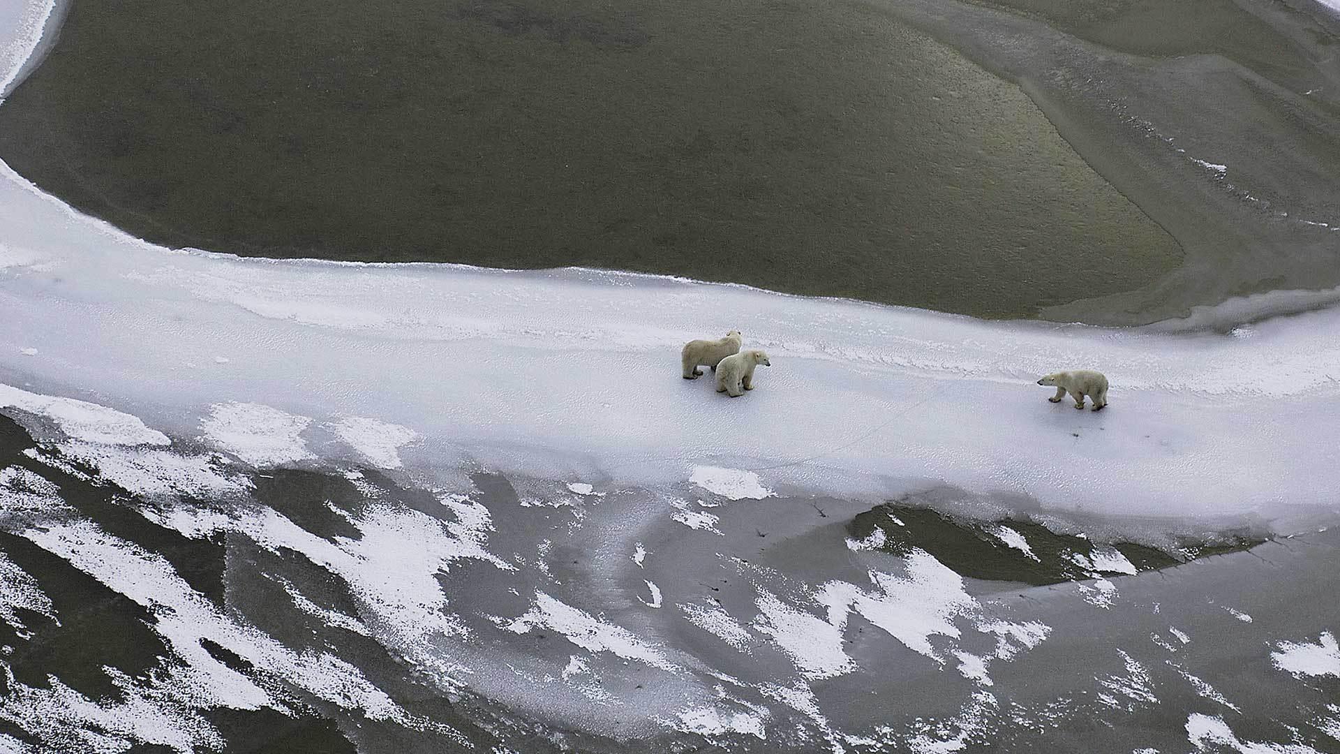 结冰的哈德逊湾