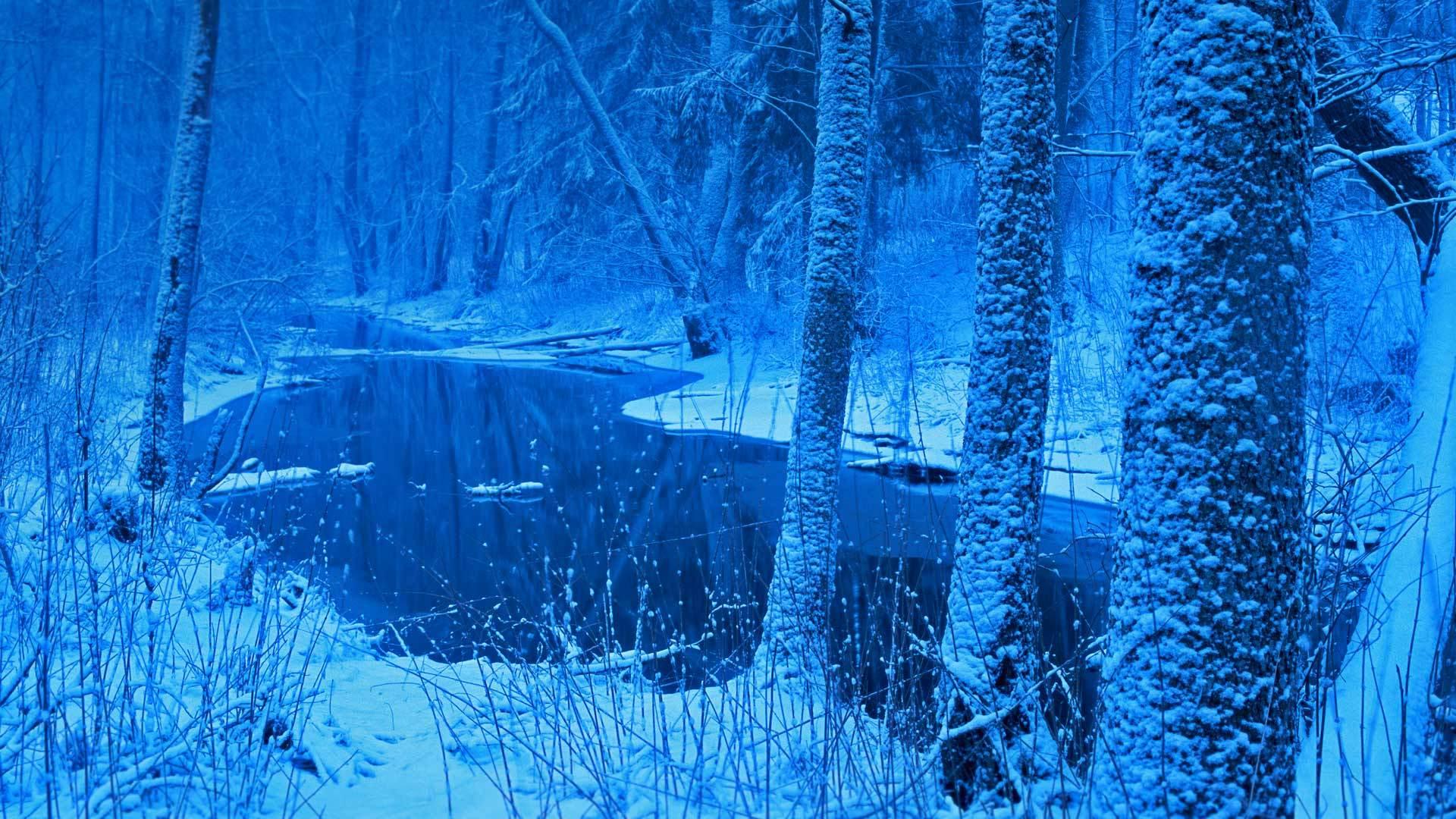 古老神秘的林区