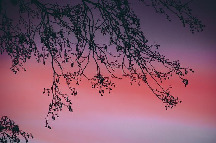 sunset-5928907__480